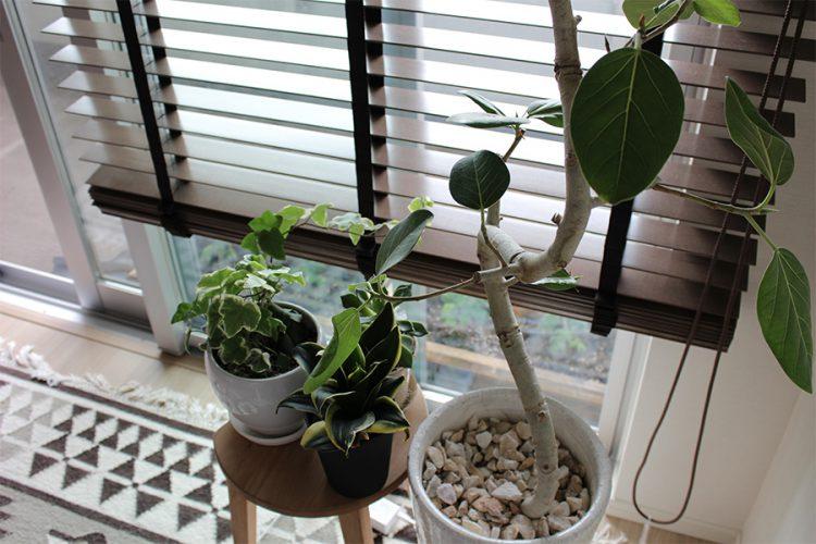 グリーン 観葉植物