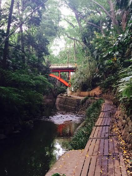 等々力渓谷 自然 東京