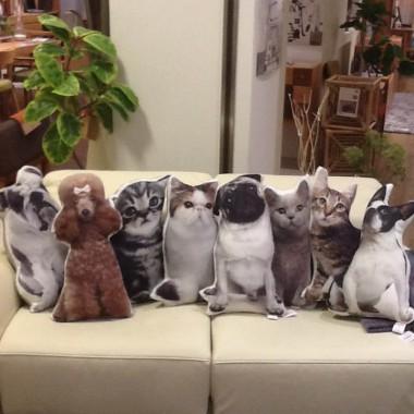 猫 犬 クッション KARE