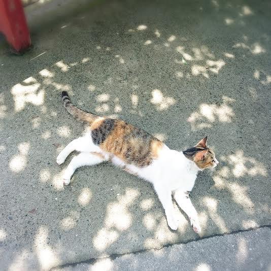 尾道 坂 猫 ひなたぼっこ